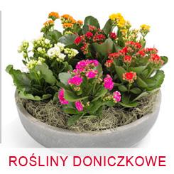 Kwiaty rośliny doniczkowe dostawa pocztą kurierską kwiatową